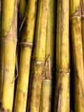 зеленый цвет тросточек Стоковое Изображение RF