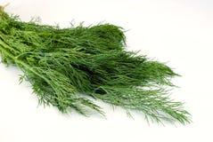 зеленый цвет укропа стоковые изображения rf