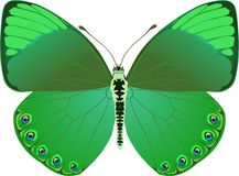 зеленый цвет фантазии бабочки Стоковые Фотографии RF