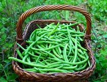 зеленый цвет фасолей свежий Стоковое Изображение RF