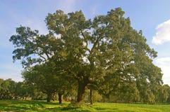 зеленый цвет фермы Стоковое Фото