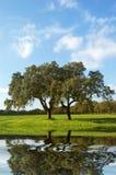 зеленый цвет фермы Стоковые Изображения RF