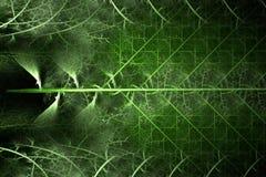 зеленый цвет фрактали папоротника Стоковая Фотография RF
