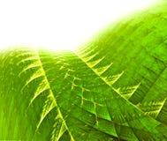 зеленый цвет фрактали предпосылки Стоковые Изображения RF
