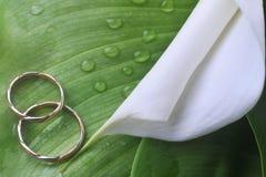 зеленый цвет цветка выходит кольца wedding белизна Стоковое Изображение