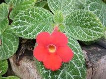 Зеленый цвет цветка красный стоковое фото