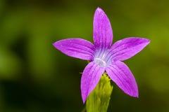 зеленый цвет цветка предпосылки славный Стоковое Изображение