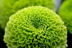 зеленый цвет цветка предпосылки Стоковые Фотографии RF
