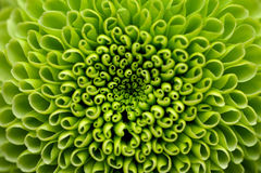 зеленый цвет цветка предпосылки Стоковое фото RF