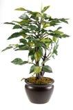 зеленый цвет цветка Стоковое Изображение