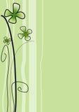 зеленый цвет цветка Стоковые Изображения RF