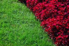 зеленый цвет цветка Стоковая Фотография