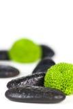 зеленый цвет цветка Стоковые Изображения