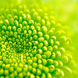зеленый цвет цветка Стоковое фото RF