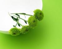 зеленый цвет цветков Стоковые Фото