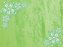зеленый цвет цветков Стоковое Изображение RF