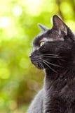 зеленый цвет черного кота предпосылки Стоковая Фотография RF