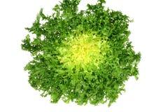 зеленый цвет эндивия Стоковое Изображение RF