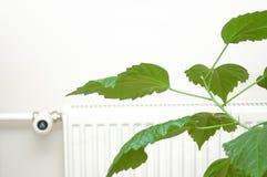 зеленый цвет энергии Стоковая Фотография RF