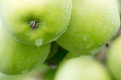 зеленый цвет яблока близкий вверх Стоковые Фото