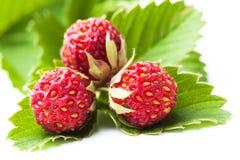 зеленый цвет ягод выходит зрелые клубники одичалым Стоковые Фото