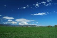 зеленый цвет 002 полей Стоковые Изображения