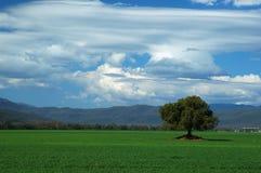 зеленый цвет 005 полей Стоковая Фотография RF