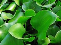 зеленый цвет Стоковое фото RF