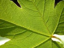 зеленый цвет Стоковые Изображения