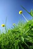 зеленый цвет Стоковое Изображение RF
