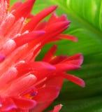 зеленый цвет Стоковое Фото