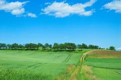 зеленый цвет 3 полей Стоковое Изображение