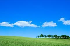 зеленый цвет 4 полей Стоковое Изображение RF