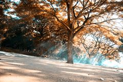 зеленый цвет 4 пущ пояса Стоковое Изображение