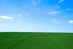 зеленый цвет 5 полей Стоковые Фотографии RF