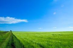 зеленый цвет 6 полей Стоковая Фотография RF