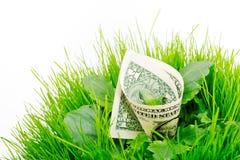 зеленый цвет Стоковые Изображения RF