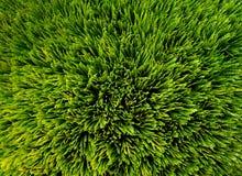 зеленый цвет backround Стоковое фото RF