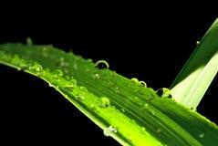 зеленый цвет brigde Стоковое фото RF