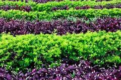 зеленый цвет bushes Стоковые Фотографии RF