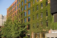 зеленый цвет chicago Стоковое Изображение