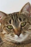 зеленый цвет eas кота Стоковые Фото