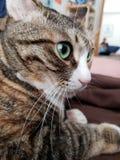 зеленый цвет eyed котом стоковая фотография
