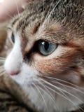 зеленый цвет eyed котом стоковые изображения rf