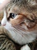 зеленый цвет eyed котом стоковое фото rf