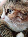 зеленый цвет eyed котом стоковое изображение