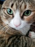 зеленый цвет eyed котом стоковые изображения