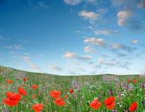 зеленый цвет flowerses поля растет красным Стоковая Фотография
