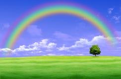 зеленый цвет glade над радугой Стоковое Изображение