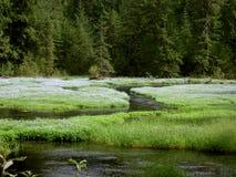 зеленый цвет glade Стоковая Фотография